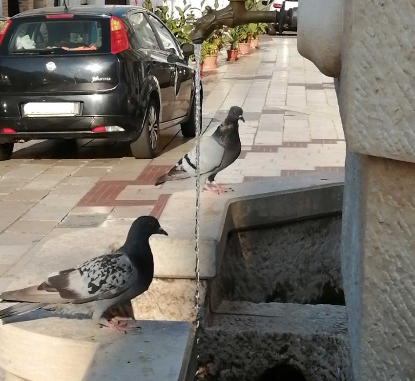 I piccioni di Piazza S. Antonio Abate