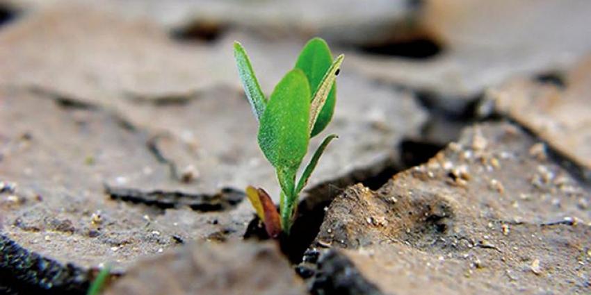 La resilienza. Considerazioni sull'ultimo consiglio regionale